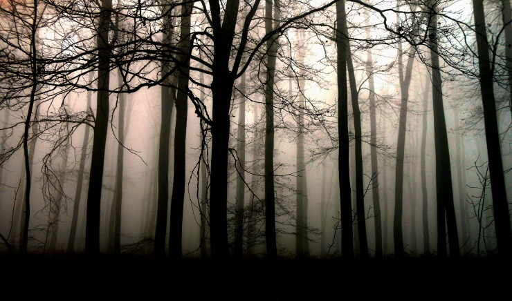 forest-547004